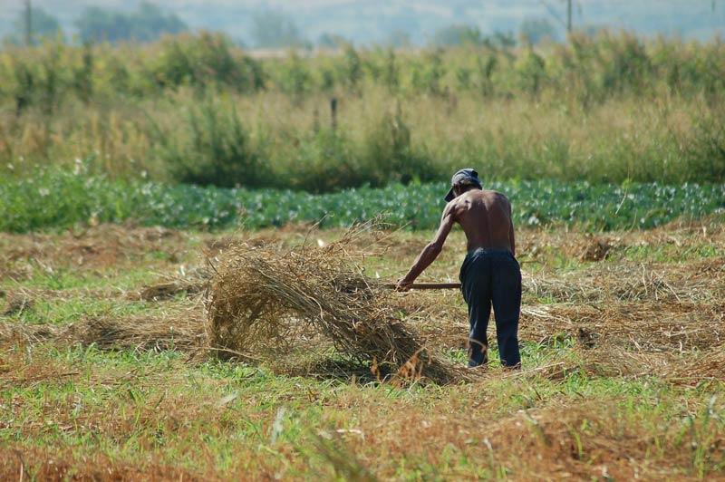 Работници в селското стопанство