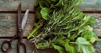 Билки и градински растения с болкоуспокояващо действие