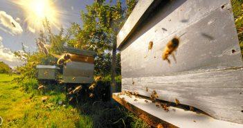 Пчелин, пчели, пчелари