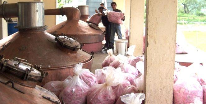 Търсим нови пазари за българско розово масло в Казахстан и Азербайджан