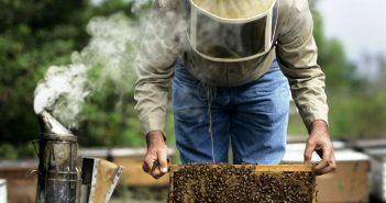 Пчеларство, пчелин