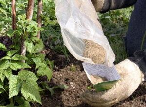 Подхранване на малини