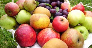 Субсидии за плодове