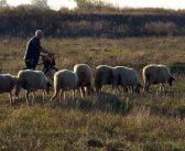 """""""Биовет"""" обяви есенна промоция за обезпаразитяване и ваксинация на овце"""