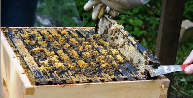 Новата Национална програма по пчеларство ще финансира кооперирането