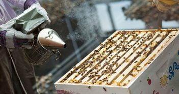 Пчели, пчеларство