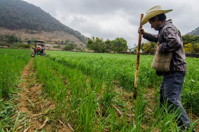 Солидарно земеделие, кооператив