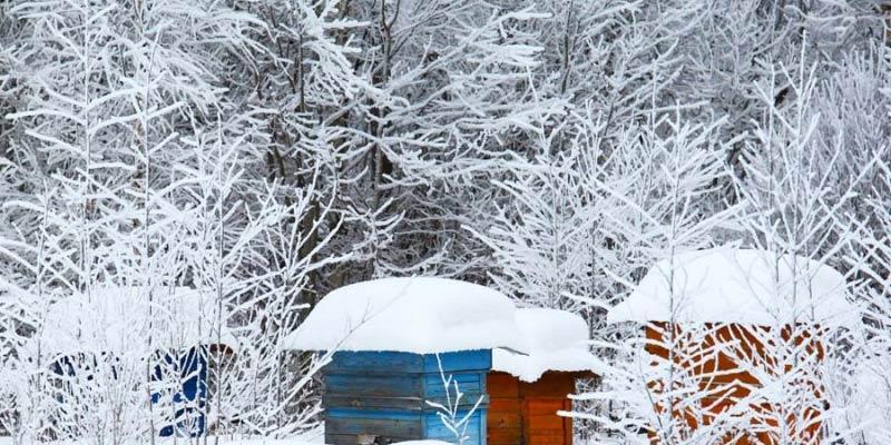 Пчели зима