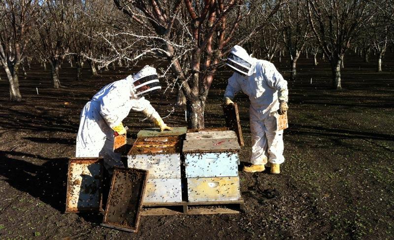 Пчели януари