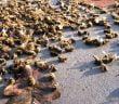 Мъртви пчели неоникотиноиди