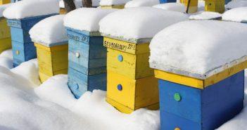 Пчелин зима