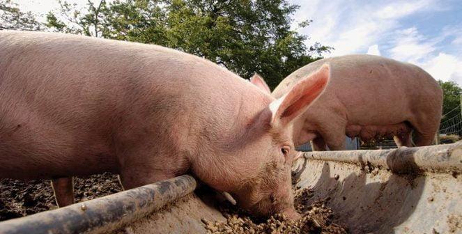 Държавата забранява да гледаме повече от три крави и прасета