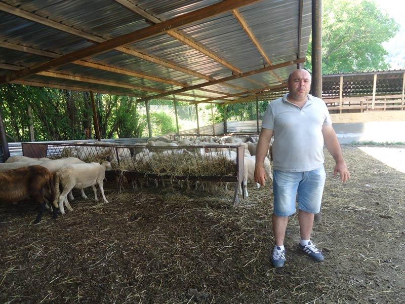 Александър Петров овце Добродан
