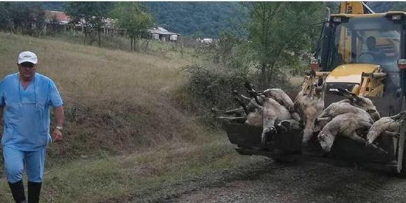 Овце Атанас Петров Кости