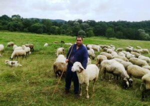 Венко Георгиев овце стадо