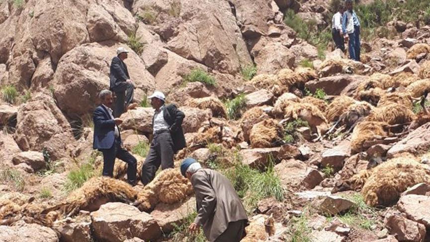 самоубийство на 500 овце в Турция