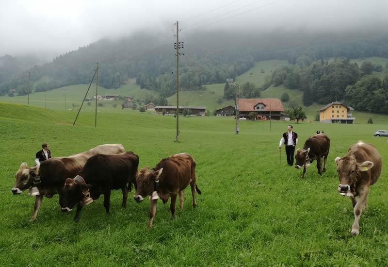 Entlebucher Alpabfahrt 2018 Praznik na slizaneto na stadata ot Alpite