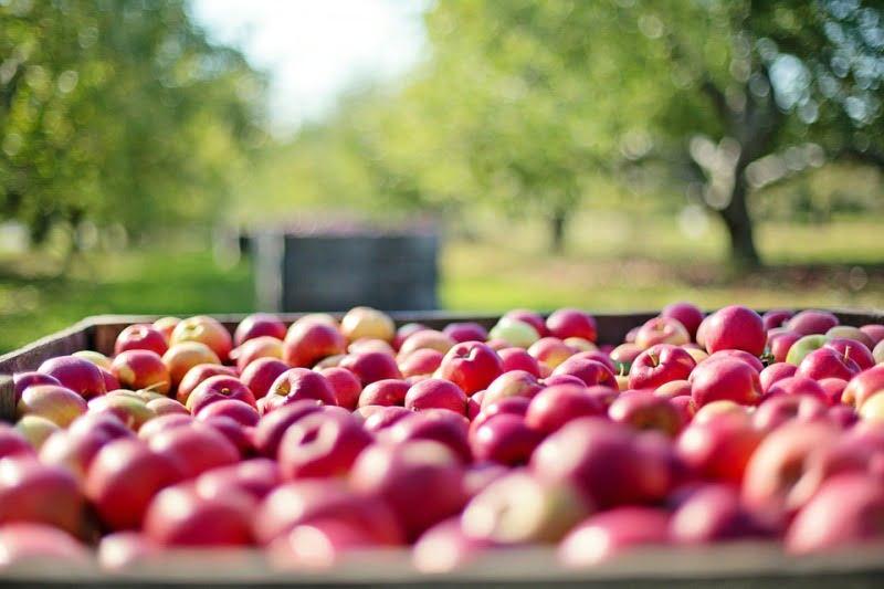 Био, ябълки
