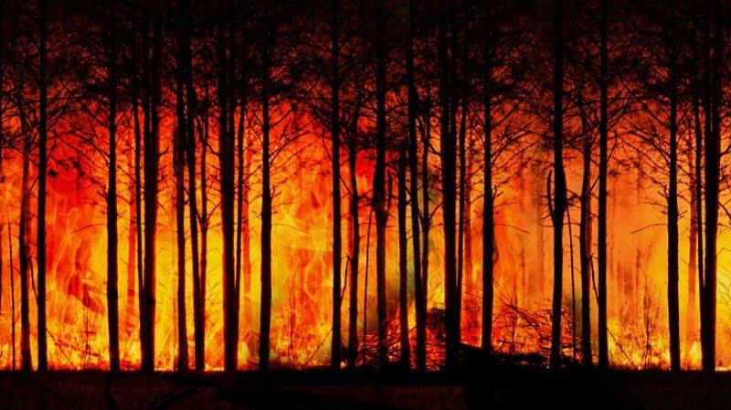 Горски пожари, климатични промени