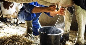 Краве мляко