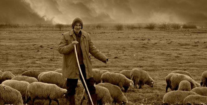 Овчар