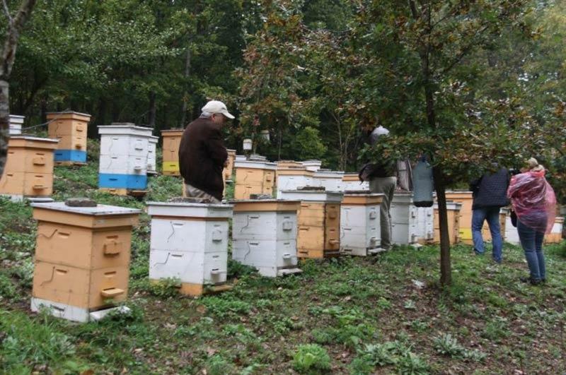 Пчелин ДГС Кости