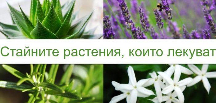 Лечебни стайни растения