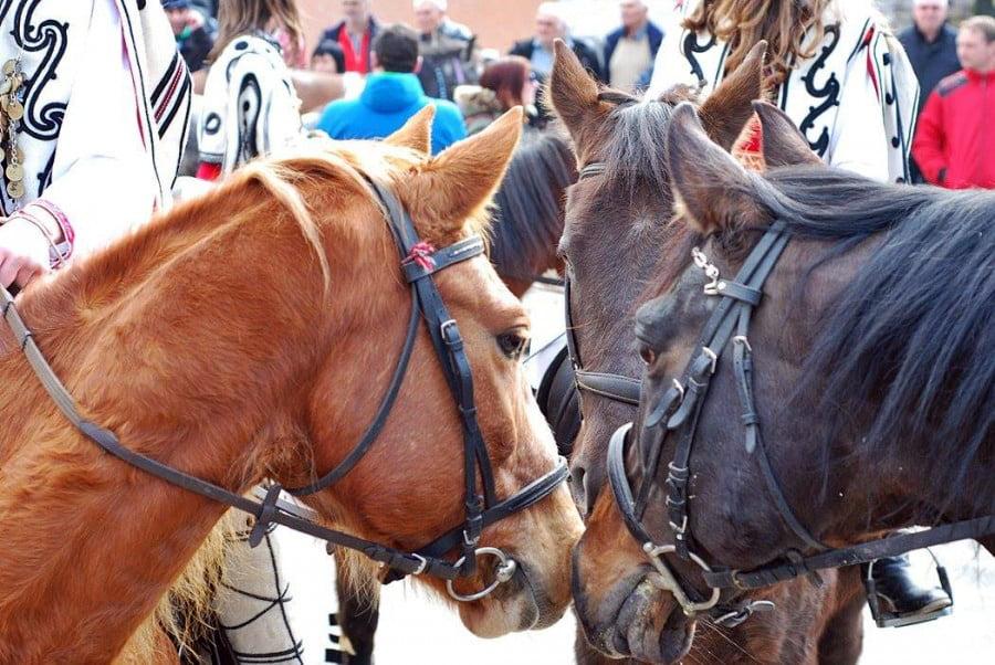 Тодоровден, коне