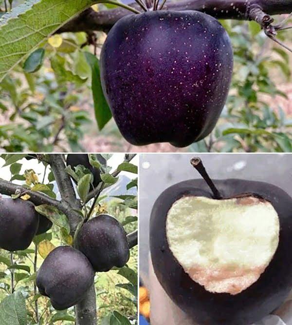 Черни ябълки