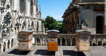 Пчелите, живеещи на покрива на Нотр Дам, оцеляха при пожара