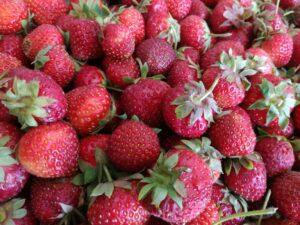 Берковски ягоди