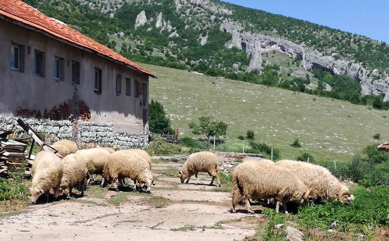 Ферма за овце Реплянка