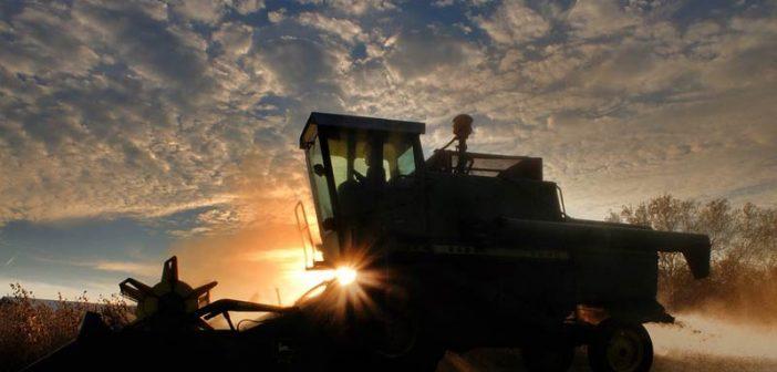 Земеделците в Добричко очакват с 10 на сто по-слаба реколта от пшеница