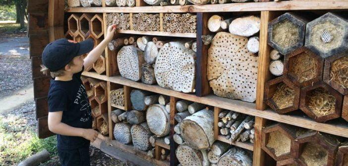 Хотели за пчели