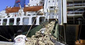 Овце износ кораби