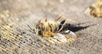 Пестициди мъртви пчели