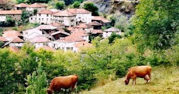 Кравеферма село Кошница