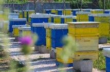 Пчелини