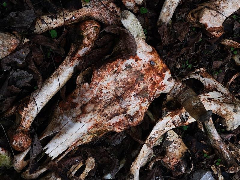 Животински отпадъци Велики Преслав