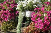 Цветята на Камен Бакърджиев