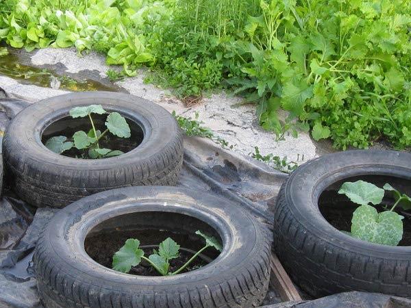 Краставици в автомобилни гуми