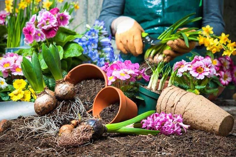 Цветарство, градинарство