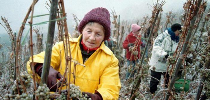 Ледено вино Айсвайн