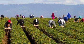 Сезонни работници