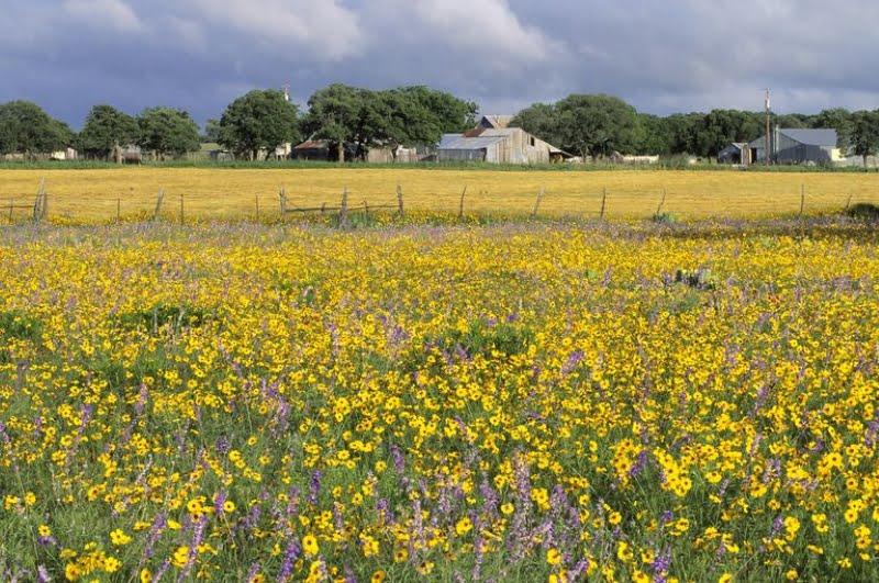 Диви цветя вместо пестициди