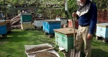 Мъртви пчели