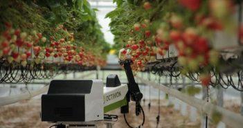 Робот за бране на ягоди