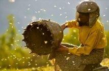 Филм Film Honeyland медена земя