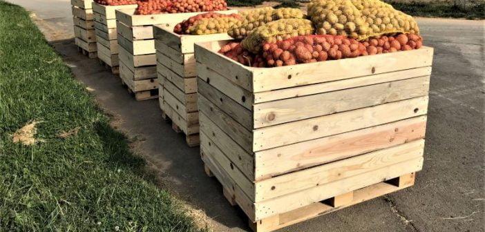 IT специалист отгледа и подарява 50 т картофи на хора в нужда