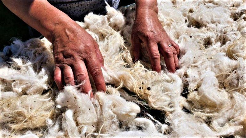 Овча вълна